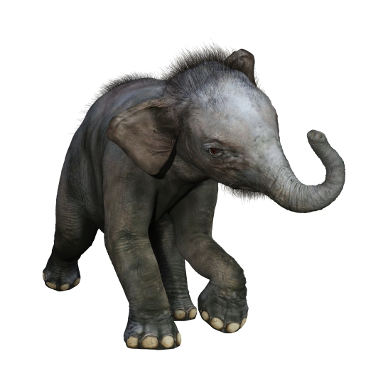 3D rendering of an Indian elephant baby isolated on white background